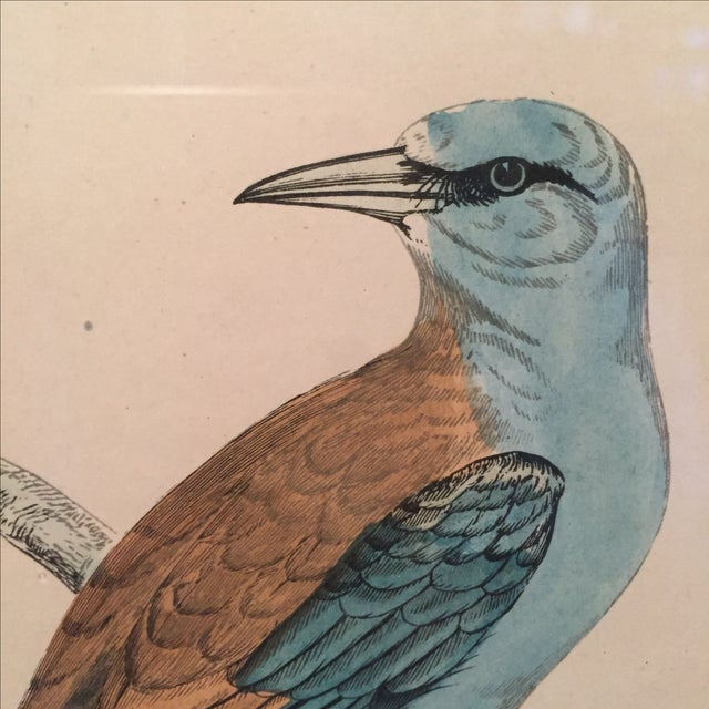 18th C. English Bird Prints in Matching Frames - Image 11 of 12