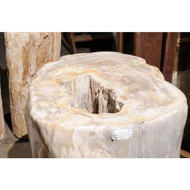 Impressively Large Petrified Wood Table Base For Sale - Image 11 of 12