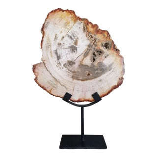 Petrified Wood Slice on Stand For Sale