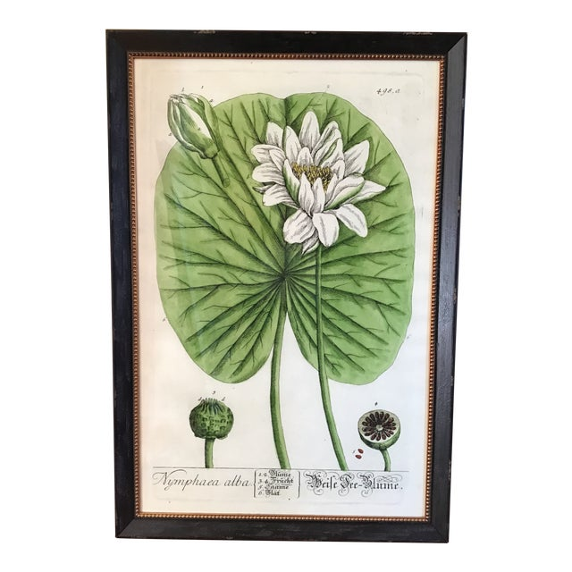 Large Turpin Pierre Chaumeton Flore Medicale Print, Framed For Sale