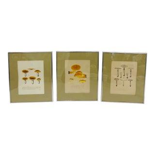 Antique Mushroom Prints in Frame - Set of 3 For Sale