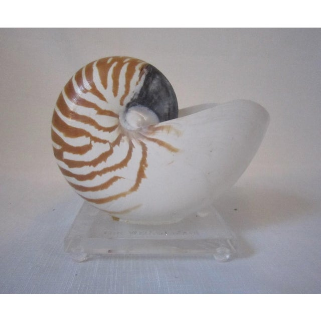 Plastic Nautilus Shell Mounted on Lucite Stand For Sale - Image 7 of 7
