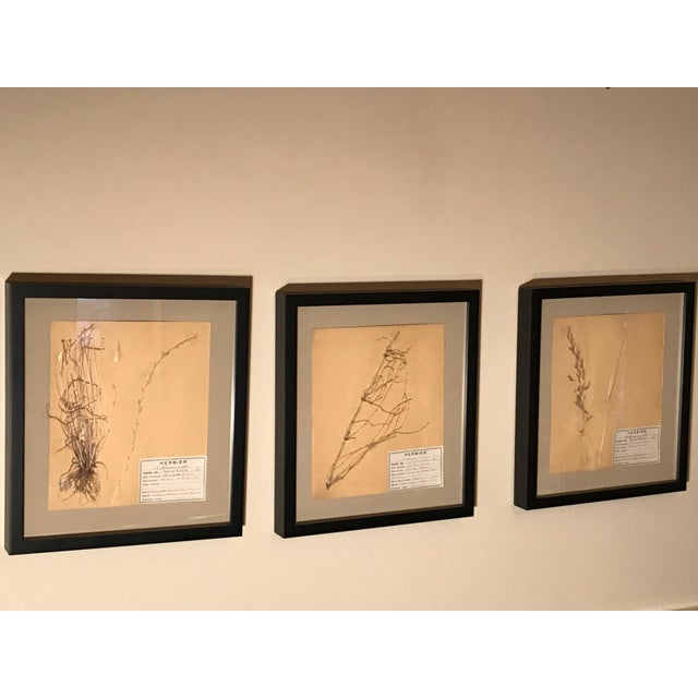 20th Century French Framed Herbier/Botanical Floral Art- 3 Pieces For Sale In Washington DC - Image 6 of 6