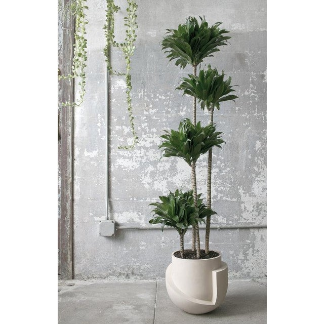 Radnor Farrah Sit Vayu Planter For Sale - Image 4 of 5