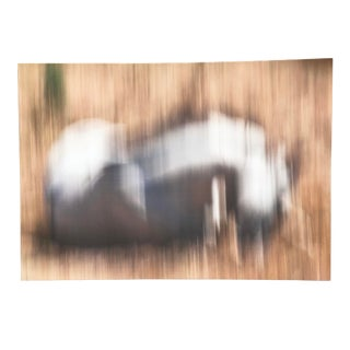 Horses Abstract Expression Photograph For Sale