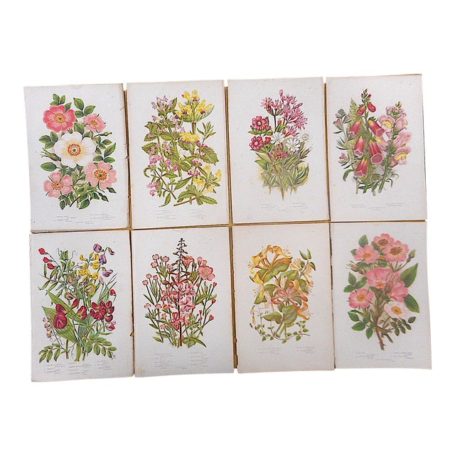 Antique Botanical Lithographs - Set of 8 For Sale