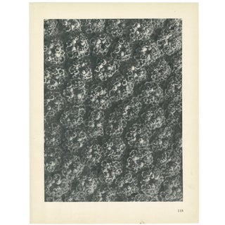 1928 Karl Blossfeldt Original Period Achillea Filipendulina Photogravure N118 For Sale