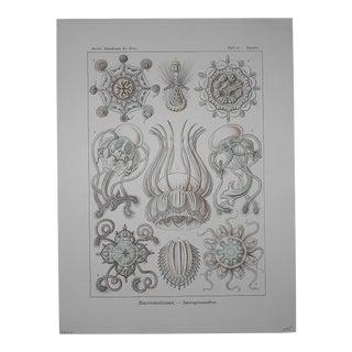 Authentic Antique 19th CenturyLithograph-Sea Creatures by Ernst Haeckel-Folio Size For Sale