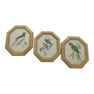 Vintage Mid-Century John Gould Bird Lithographs - Set of 3 For Sale