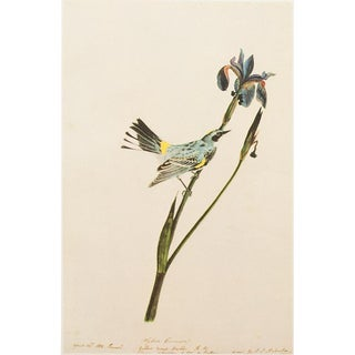 1960's Yellow Warbler Lithograph by Audubon