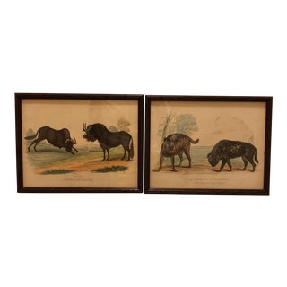 Vintage Framed Artwork of Animals/Gnus and Hyenas - Pair For Sale