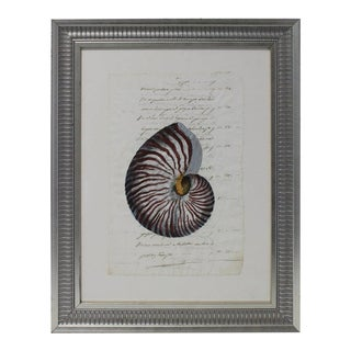 Hand Painted Nautilus Shell on Parchment For Sale