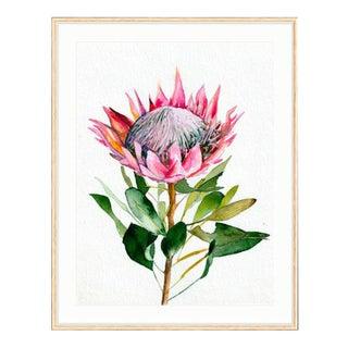 """Protea"" Framed Fine Art Print"