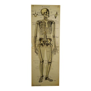 Antique Anatomical Wall Chart Depicting the Human Skeleton For Sale