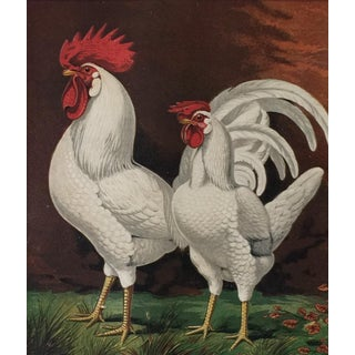 Antique Rooster Print For Sale