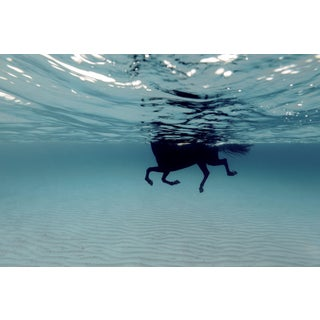 White Framed Swimming Horse in the Mediterranean Photograph For Sale