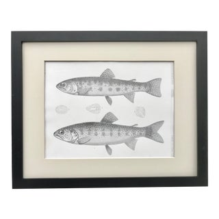 19th Century American Antique Lithograph of Trout Fish C. 1860 For Sale