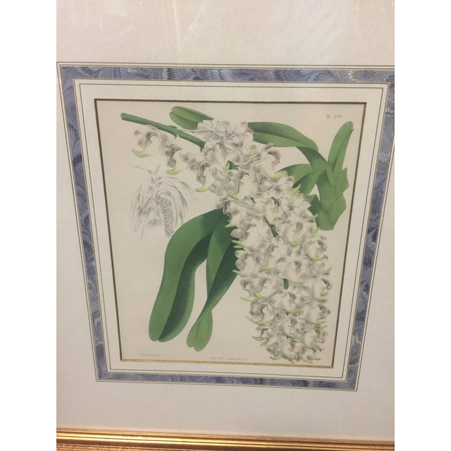 """Lovely framed print of Christmas Orchids, framed and matted and in excellent condition. This measures 22"""" tall x 19"""" wide,..."""