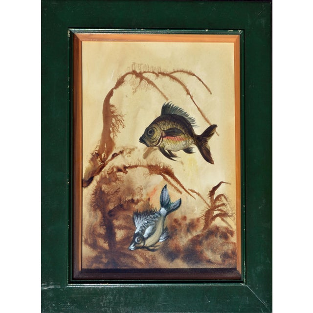 Blue and yellow fish, a watercolor painting by Italian artist Vittorio Guidotti. Presented in a green wooden frame. By a...