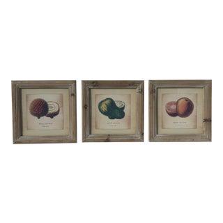 Botanical Study Prints - Set of 3 For Sale