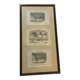 Framed 1885 Cow Prints From Massachusetts For Sale