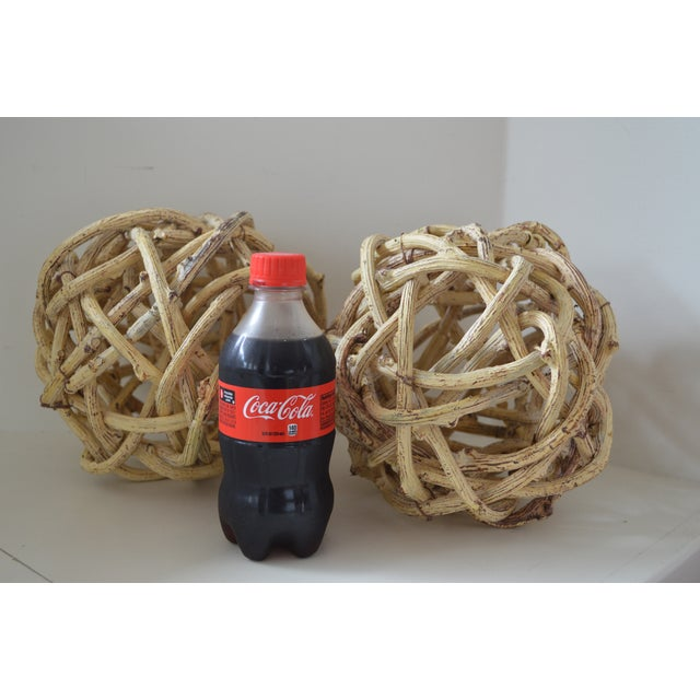 Natural Windsor Knot Balls in Dried Wisteria Stems - a Pair For Sale - Image 4 of 10