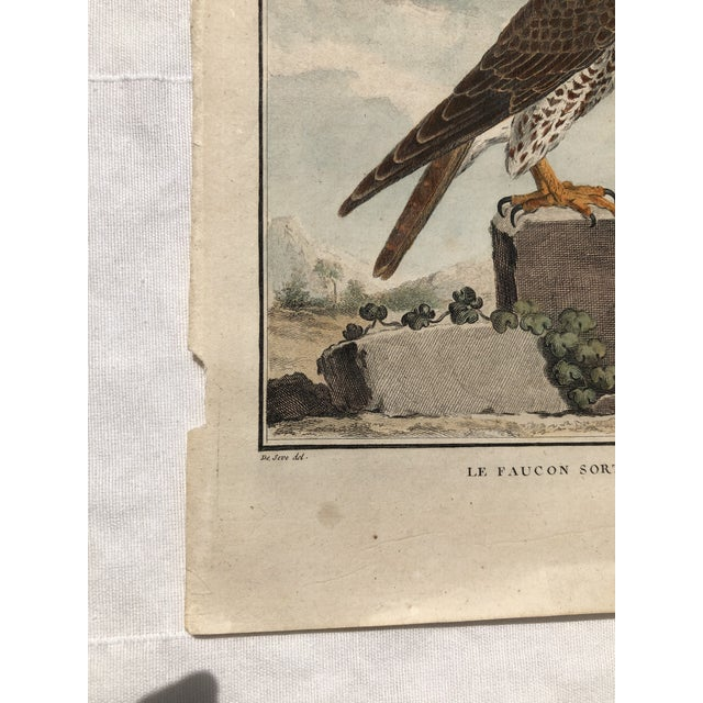 Blue 18th Century French Bird Engraving Signed by Jacques De Sève Featuring a Falcon For Sale - Image 8 of 13