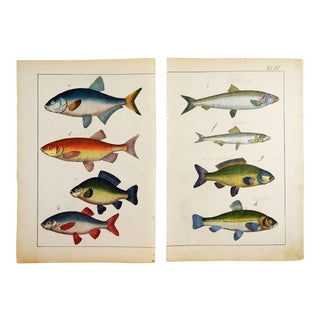 Colorful Fish Woodcut Prints - a Pair