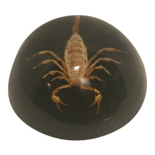 1970s Vintage Scorpion Resin Paperweight For Sale