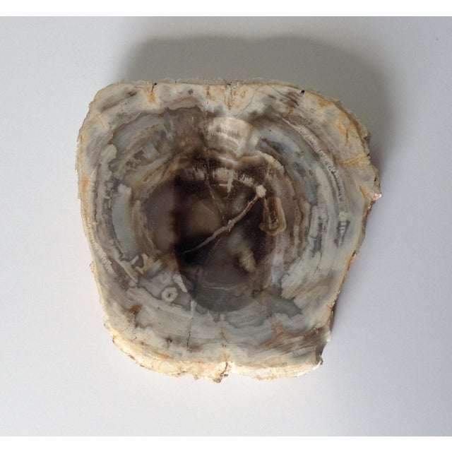 Vinatge Polished Petrified Wood Coved Catchall Dish - Image 8 of 11