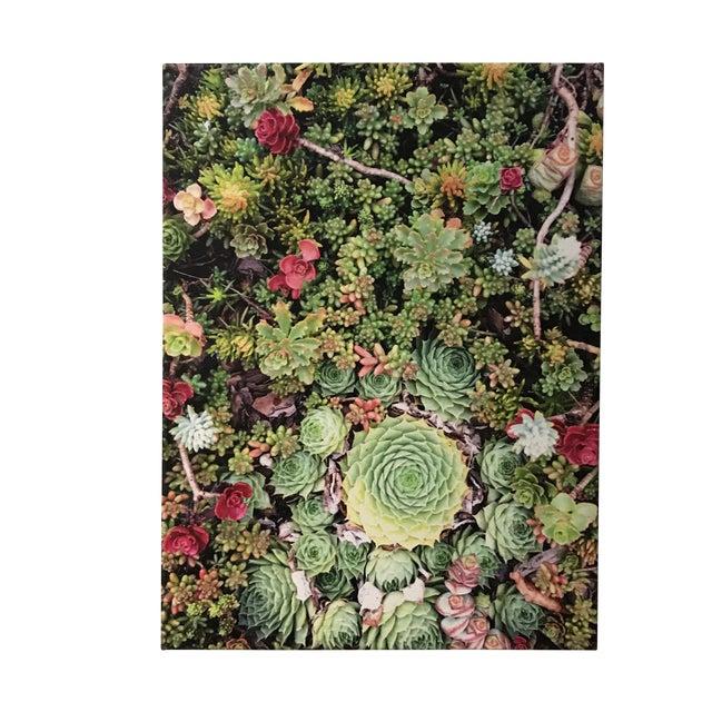 """Succulents"" Photograph on Canvas For Sale"