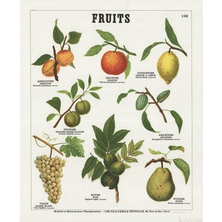 "Emile Deyrolle ""Fruits II"" Lithograph Poster"