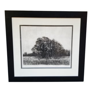 Black and White Engraving of Oak Trees in Black Wooden Frame - Signed For Sale