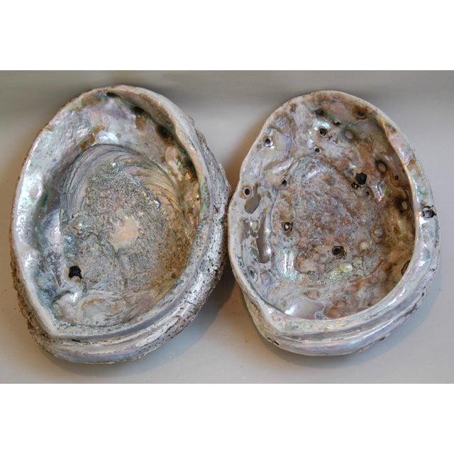Natural Iridescent Abalone Seashells - a Pair - Image 2 of 6