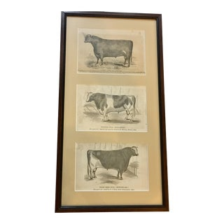 Framed 1885 Bulls Prints From Massachusetts For Sale