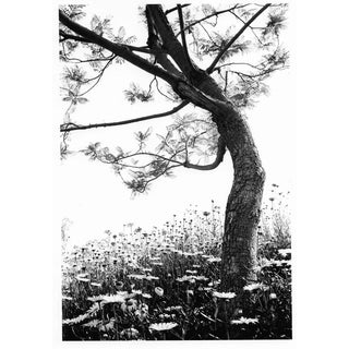 Field of Daisies Photo by Garo 1970s For Sale