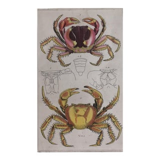 Late 19th Century Crabs Engraving For Sale