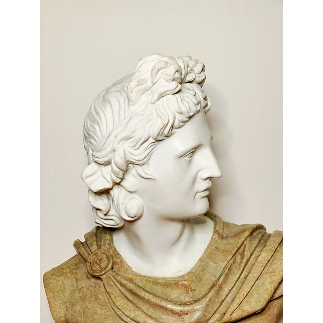 Italian Italian Marble Bust of Appollo Belvedere For Sale - Image 3 of 12