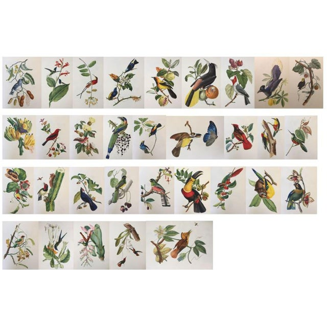 1st Edition Full Color Lithographs of Tropical American Birds - Set of 30 For Sale - Image 13 of 13