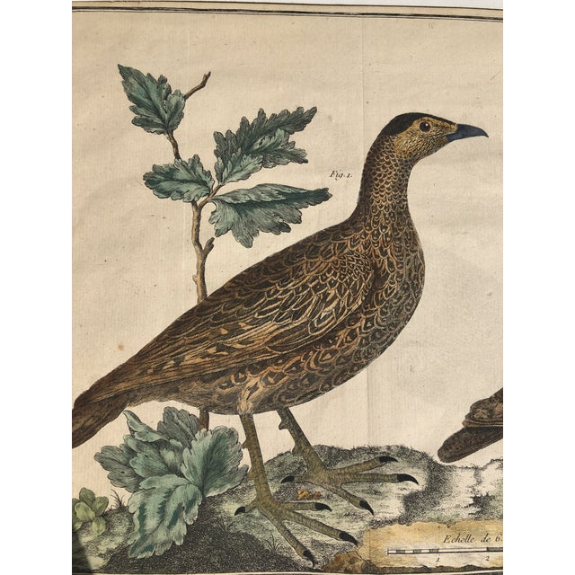 Brown 18th Century French Matted Bird Engraving by Martinet Featuring a Senegal Partridge and a Madagascar Quail For Sale - Image 8 of 13