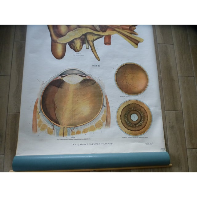 Vintage American Frohse Ear & Eye Anatomy Chart For Sale - Image 4 of 7