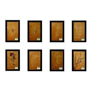 French Framed Botanicals - Set of 8 For Sale