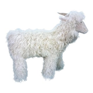 White Tibetan Lamb Sheep