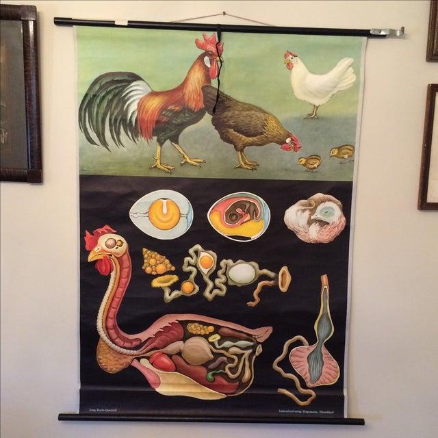 Jung-Koch-Quentell Chart Chicken - Image 11 of 11