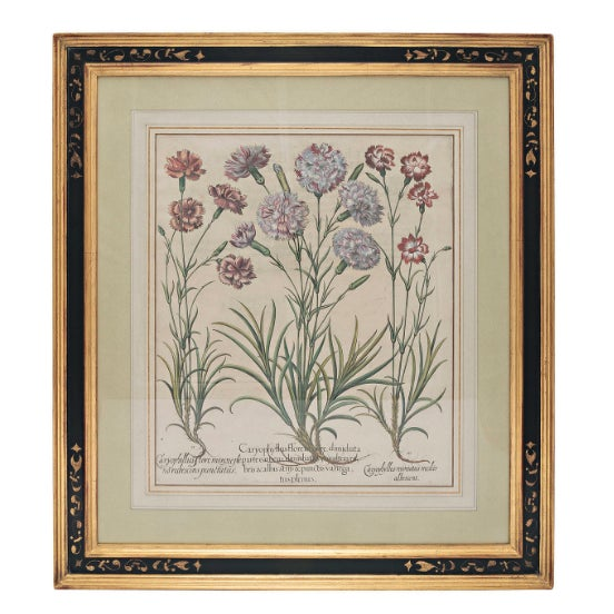 "Basil Besler ""Caryophyllus Flore"" Botanical Print For Sale - Image 4 of 7"
