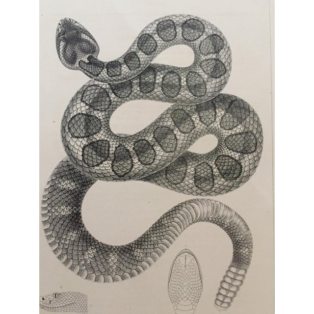 Antique Western Rattlesnake Lithograph C.1860 - Image 2 of 5