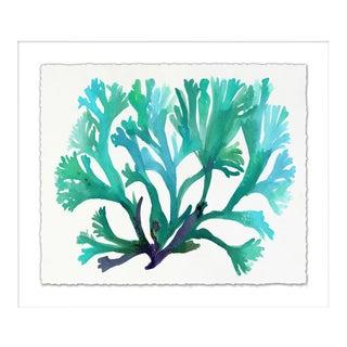 Wendover Transparent Sea Life Framed Print