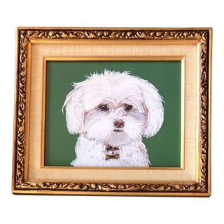 Maltese Dog Print by Contemporary Artist Judy Henn For Sale