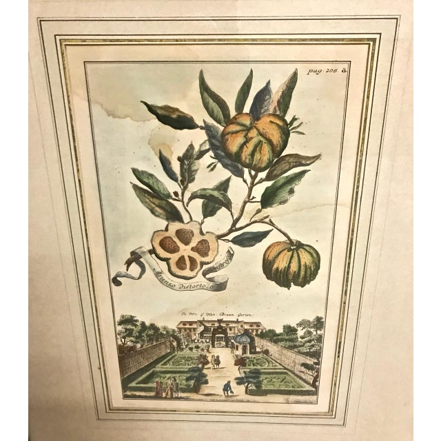 18th Century Antique Volkhammer Botanical Engravings - A Pair For Sale In Los Angeles - Image 6 of 12