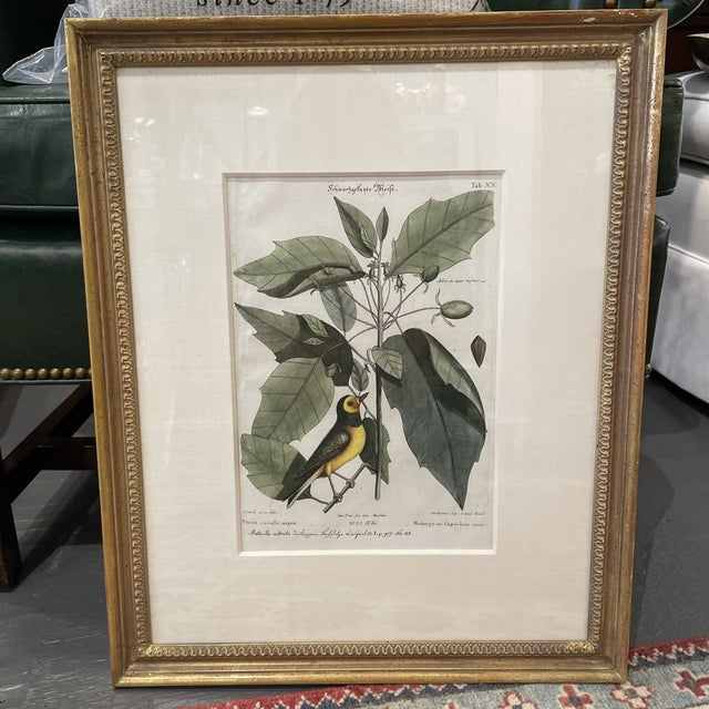 Antique Bird print by Mark Catesby depicting a bird and flowers. Beautiful for any environment